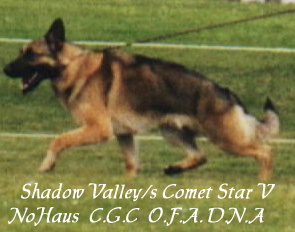 ShadowValley's Comet Star V Nohaus, C.G.C., O.F.A., D.N.A.